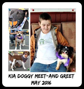 Photo from Warrenton Kia Doggy Meet-and-Greet